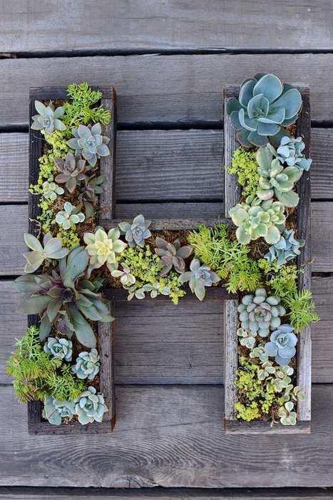 letras de madera con plantas suculentas